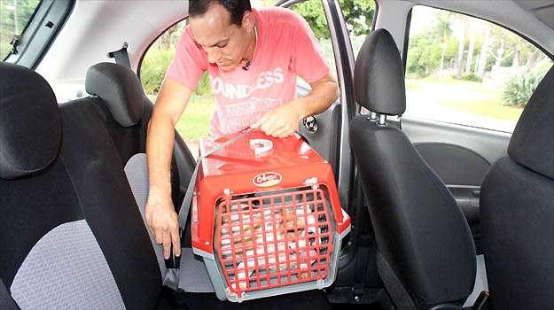 Saiba como transportar seu animal de estima��o com seguran�a