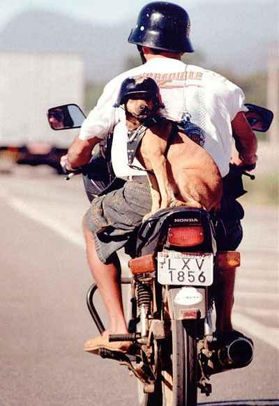 O melhor amigo dos humanos usa capacete igual ao do dono e viaja tranquilamente preso pela coleira na garupa da moto  - Daniel Conzi/Diário Catarinenese - 30/5/06
