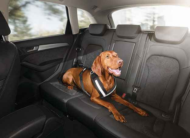 Audi lan�a equipamentos para transportar animais com pre�os at� R$ 775