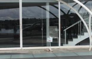 Fred descansando na porta da igrejinha da Pampulha