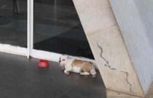 Fred deitado na porta da igreja que leva o nome do protetor dos animais